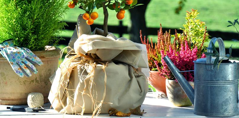richtig k belpflanzen berwintern lassen. Black Bedroom Furniture Sets. Home Design Ideas
