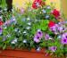 balkonpflanzen_abc
